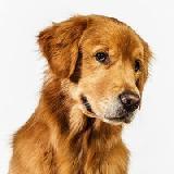 Что делать с непослушной собакой?