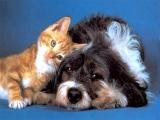 Ветеринарная медицина для пациентов