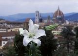 Киноклуб «Флоренция. Звезда Возрождения»