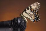 Ораторское искусство - вторая ступень. Учимся говорить понятно и красиво