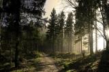 Показ эко-фильмов о лесе